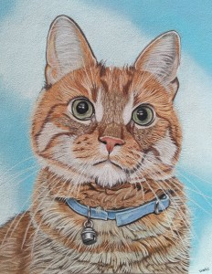 Een portret van de mooie kat Storm.
